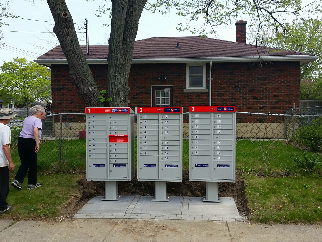 Mailboxes installed directly in the drip line of a tree